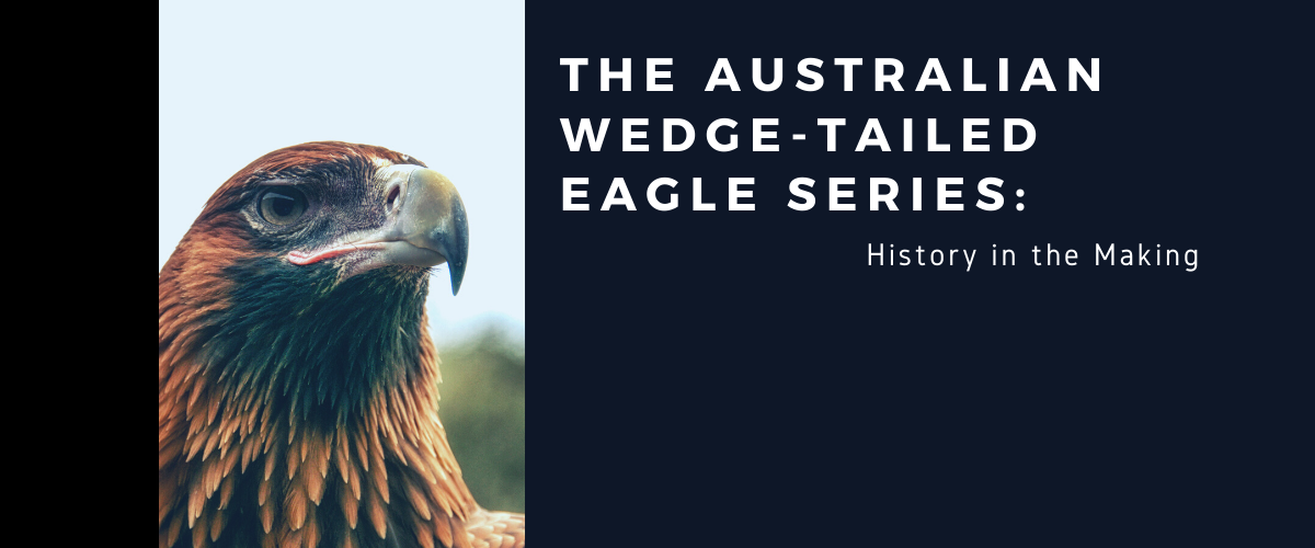 The Australian Wedge Tailed Eagle Series: History in the Making