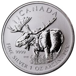2012 Canadian Wildlife Moose
